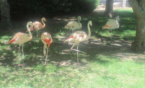 Gradina Zoologica din Tirana
