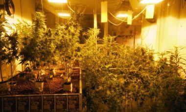Muzeul Marijuana si Cannabis din Amsterdam