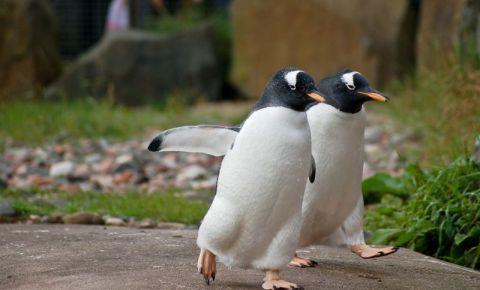Gradina Zoologica din Edinburgh