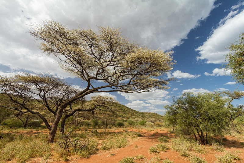 Savana Masai Mara din Kenya