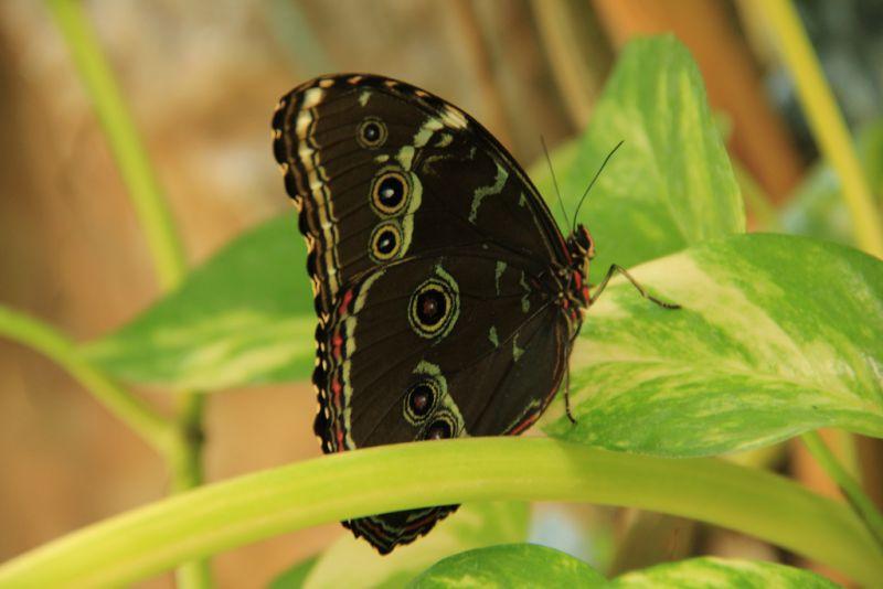 Imagini pentru poze cu fluturi exotici