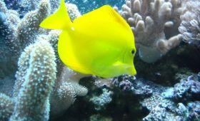 Aquarium din Barcelona