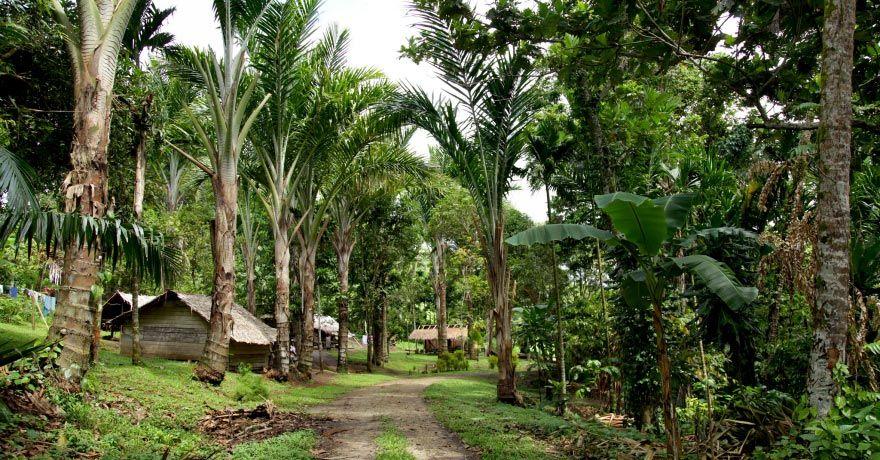 Insula Bougainville