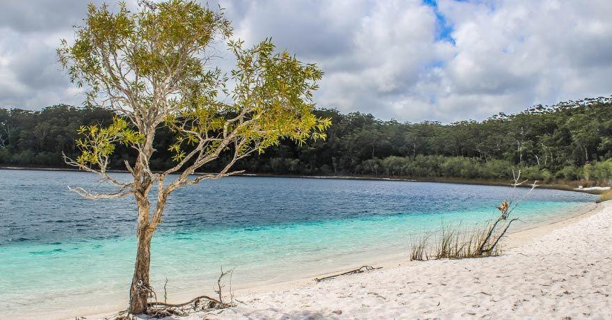 Insula Fraser