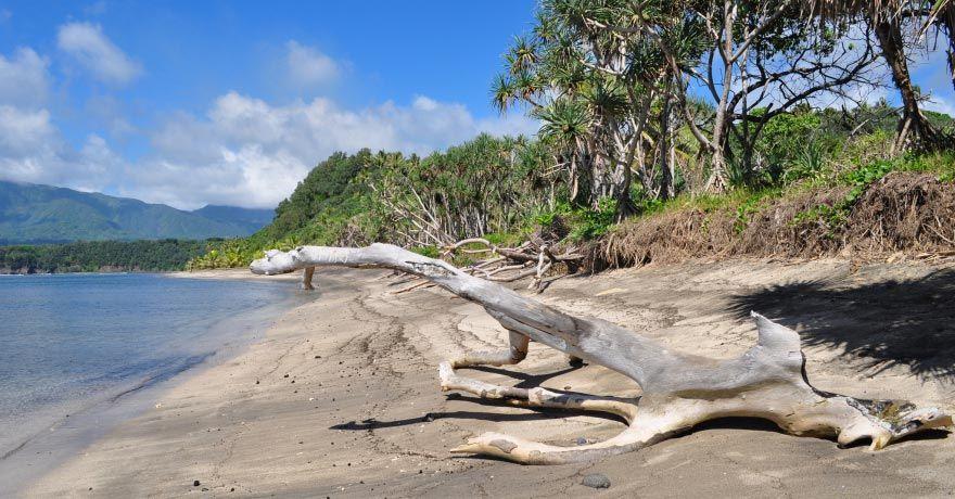 Insula Tanna