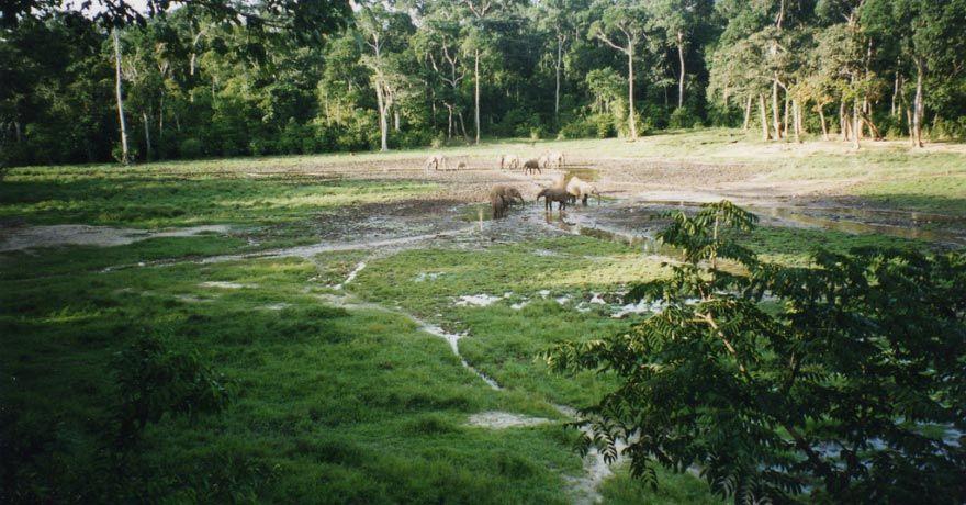 Parcul National Dzanga-Sangha