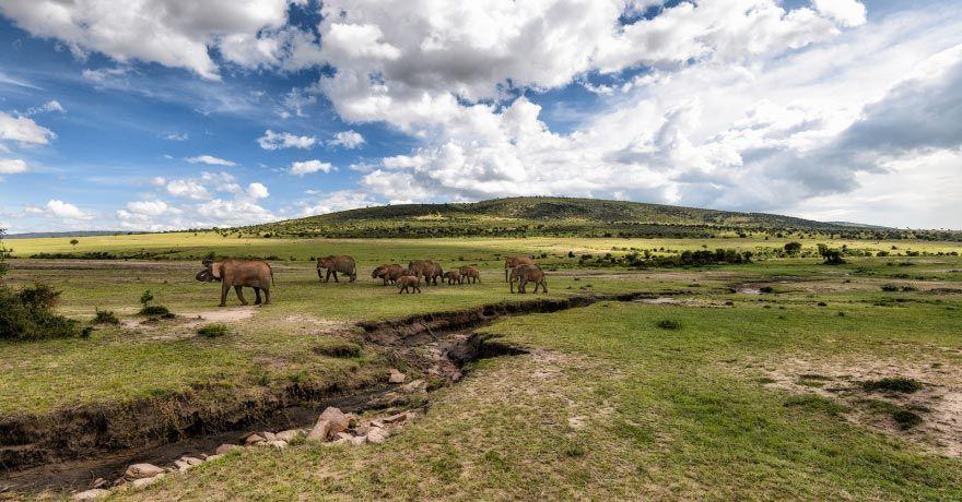 Parcul National Masai Mara