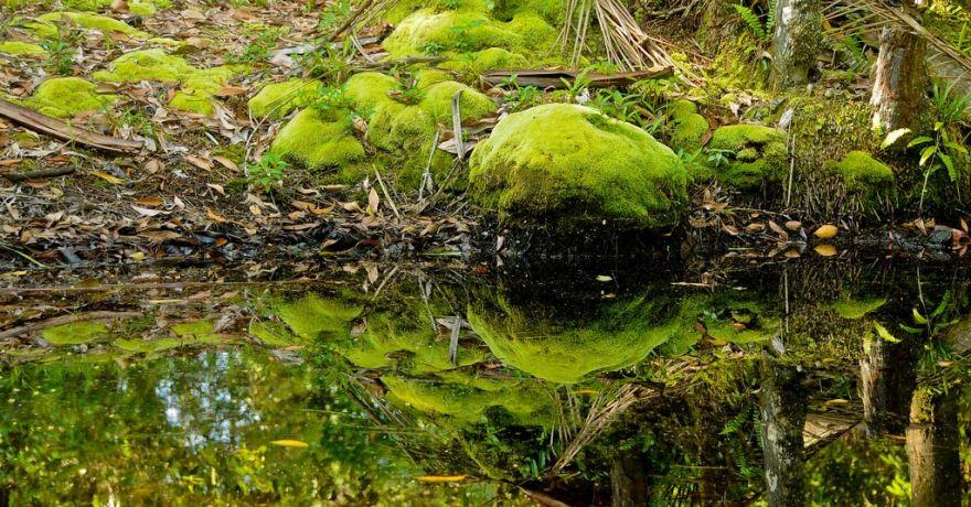 Parcul National Similajau
