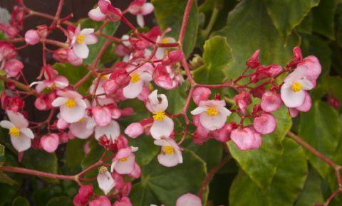 Gradina cu Orhidee din Insula Madeira