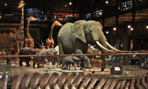 Muzeul de Istorie Naturala din Paris