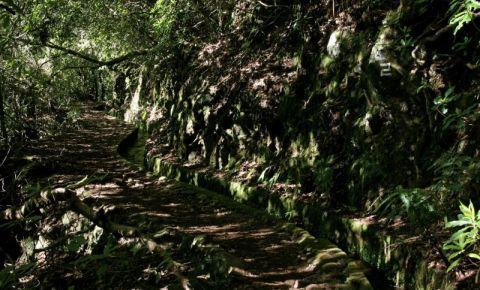 Traseul Ribeiro Frio - Portela din Insula Madeira