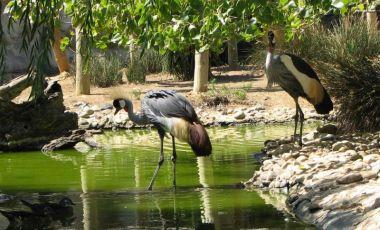 Gradina Zoologica din Lagos