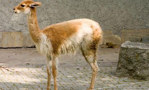 Acvariul si Gradina Zoologica din Viena