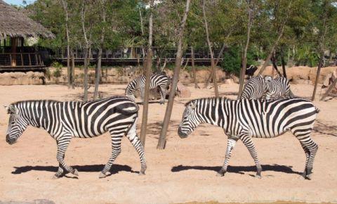 Gradina Zoologica Bioparc din Valencia