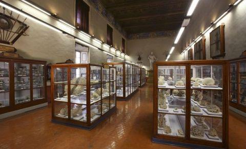 Muzeul de Istorie Naturala Vittorio Bottego din Parma