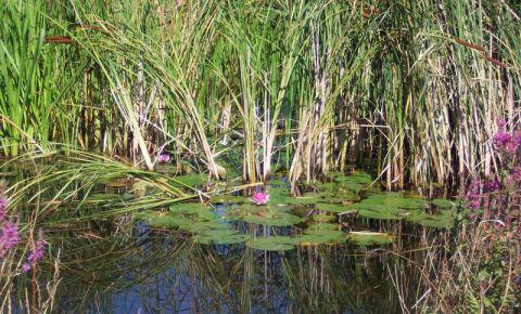Rezervatia London Wetland din Londra