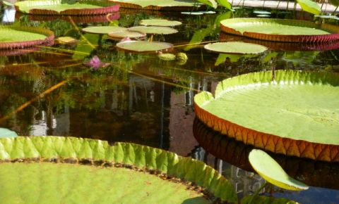 Gradina Botanica din Amsterdam