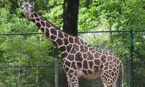 Gradina Zoologica din Frankfurt