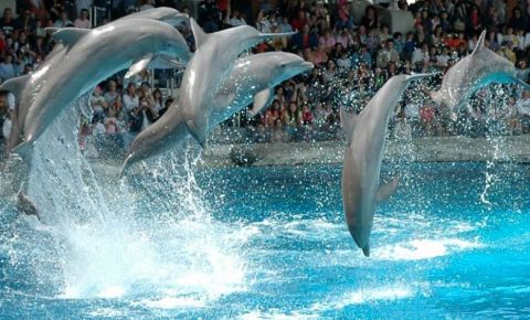 Delfinariul din Varna
