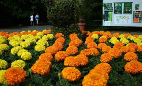 Gradina Botanica Fuveszkert din Budapesta