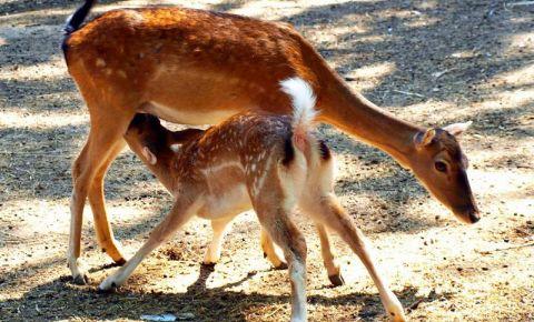 Gradina Zoologica din Varna