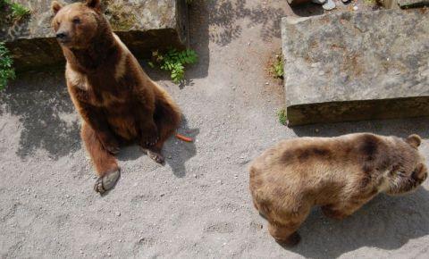 Groapa cu Ursi din Berna