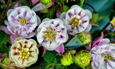 Gradina de Flori Montane din Kitzbuhel