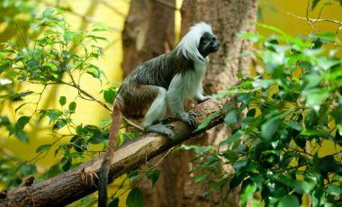 Gradina Zoologica din Berna