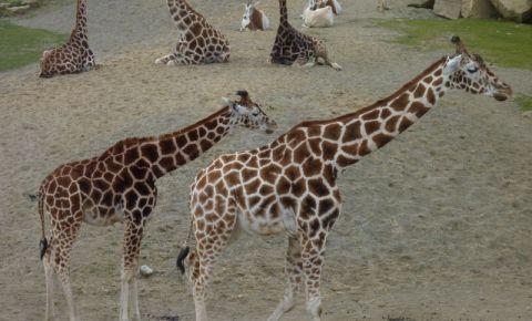 Gradina Zoologica din Dublin