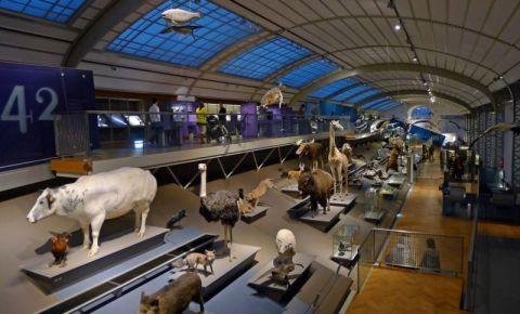 Muzeul de Stiinte Naturale din Bruxelles