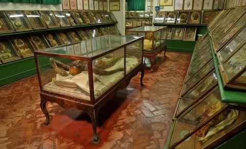 Muzeul de Zoologie si Istorie Naturala din Florenta