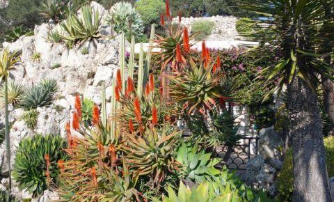 Gradina Exotica din Monaco