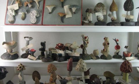Muzeele Academiei de Stiinta din Siena