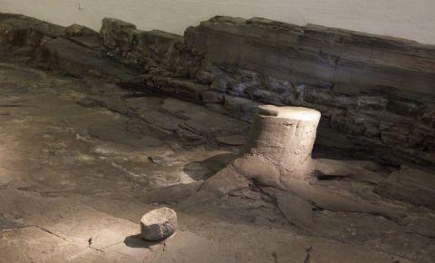 Padurea Fosilizata din Glasgow