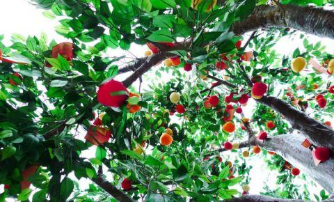 Copacul Dorintelor din Hong Kong