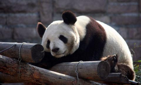 Gradina Zoologica din Beijing