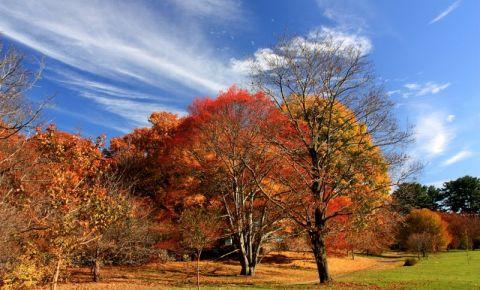 Parcul Arnold din Boston