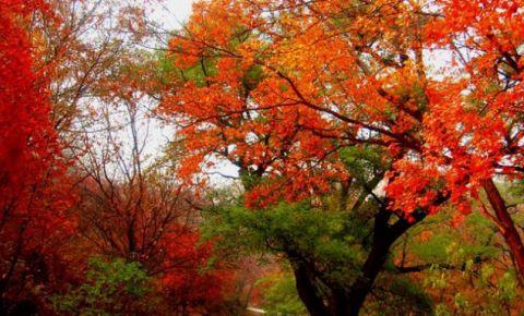 Parcul Dealurilor Parfumate din Beijing