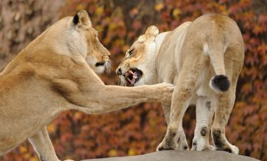 Gradina Zoologica Lincoln Park din Chicago