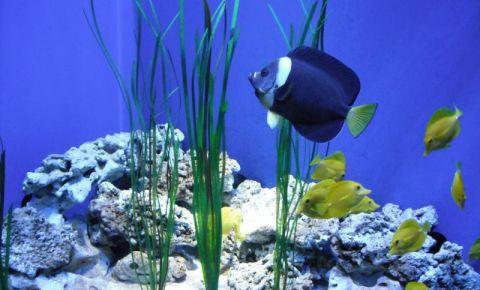 Acvariul Blue Reef din Bristol