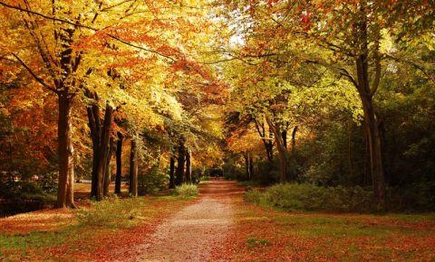 Parcul Lickey Hills din Birmingham