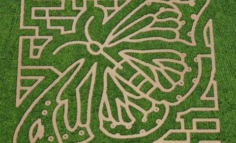 Labirintul din York