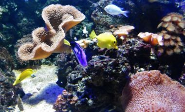 Acvariul Sealife Centre din Blackpool