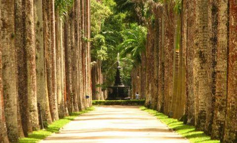 Gradina Botanica din Rio de Janeiro