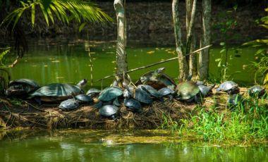 Parcul Mindu din Manaus