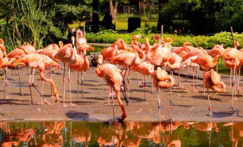 Gradina Zoologica din Dresda