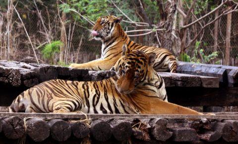 Lumea Safari din Bangkok