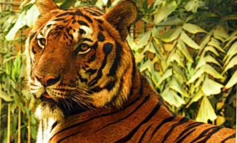 Gradina Zoologica din Bangkok