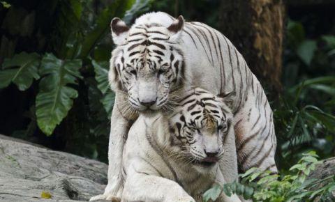 Gradina Zoologica din Singapore