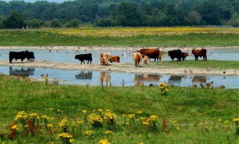 Rezervatia Naturala Het Zwin din Knokke